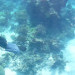 Belize field log 3: Journey to the center of the reef