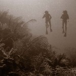 Reef Reminiscences: The way coral reefs were