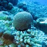 Chagos expedition 2013
