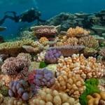 GBR_corals-310×150