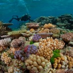 GBR_corals-590×400