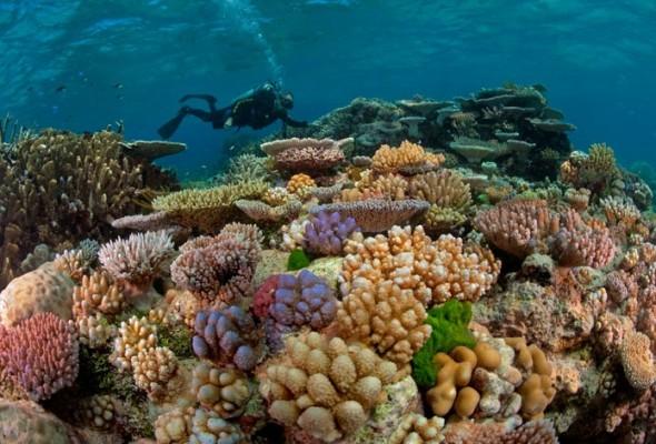 GBR_corals-590x400