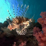 Lionfish - the new normal