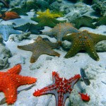 A glass half full view of coral reef conservation