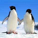 Academic-NGO partnerships to optimize and utilize conservation science