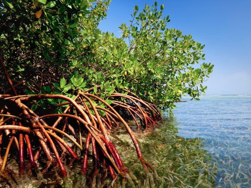 mangrove_seagrass