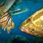 Interview with Abel Valdivia about lionfish and biotic resistance
